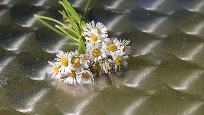 Jarní květiny. Foto: www.fotoguru.cz