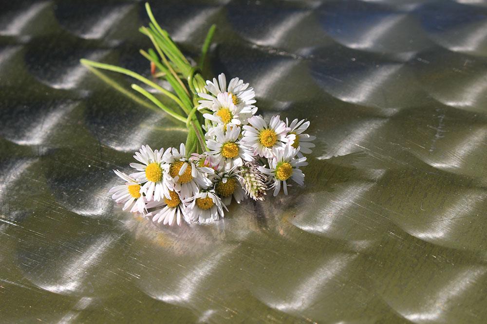 Jarní květiny - Fotoguru.cz